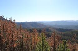 black hills backpacking, South Dakota backpacking, South Dakota pine beetle
