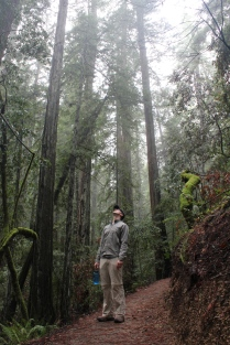 redwoods in awe, redwoods misty, redwoods looking up, redwoods feeling small, sonoma in december