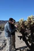 joshua tree in december, Joshua Tree National Park cholla cactus garden, stabbed by a cactus, joshua tree bad idea