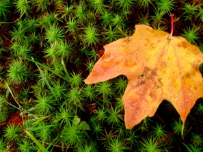 wisconsin fall colors, northern wisconsin fall leaves