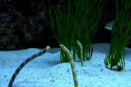 shedd aquarium photography, eels shedd aquarium chicago