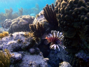 Roatan, spearfishing, gigging, underwater photography, invasive species