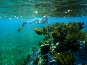 snorkeling, Roataan, reef, sea grass, underwater photography