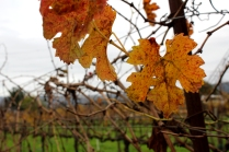 Winter in Sonoma, winter in wine country