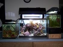 20 gallon high, complex aquarium setup