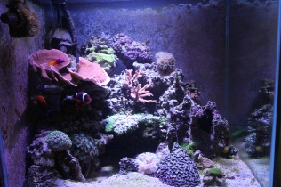 Aquarium, fish tank, mixed reef, 60 gallon cube, LED