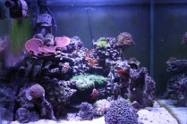60 gallon cube, mixed reef