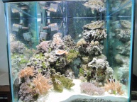 60 gallon cube mixed reef, 60 gallon aquarium