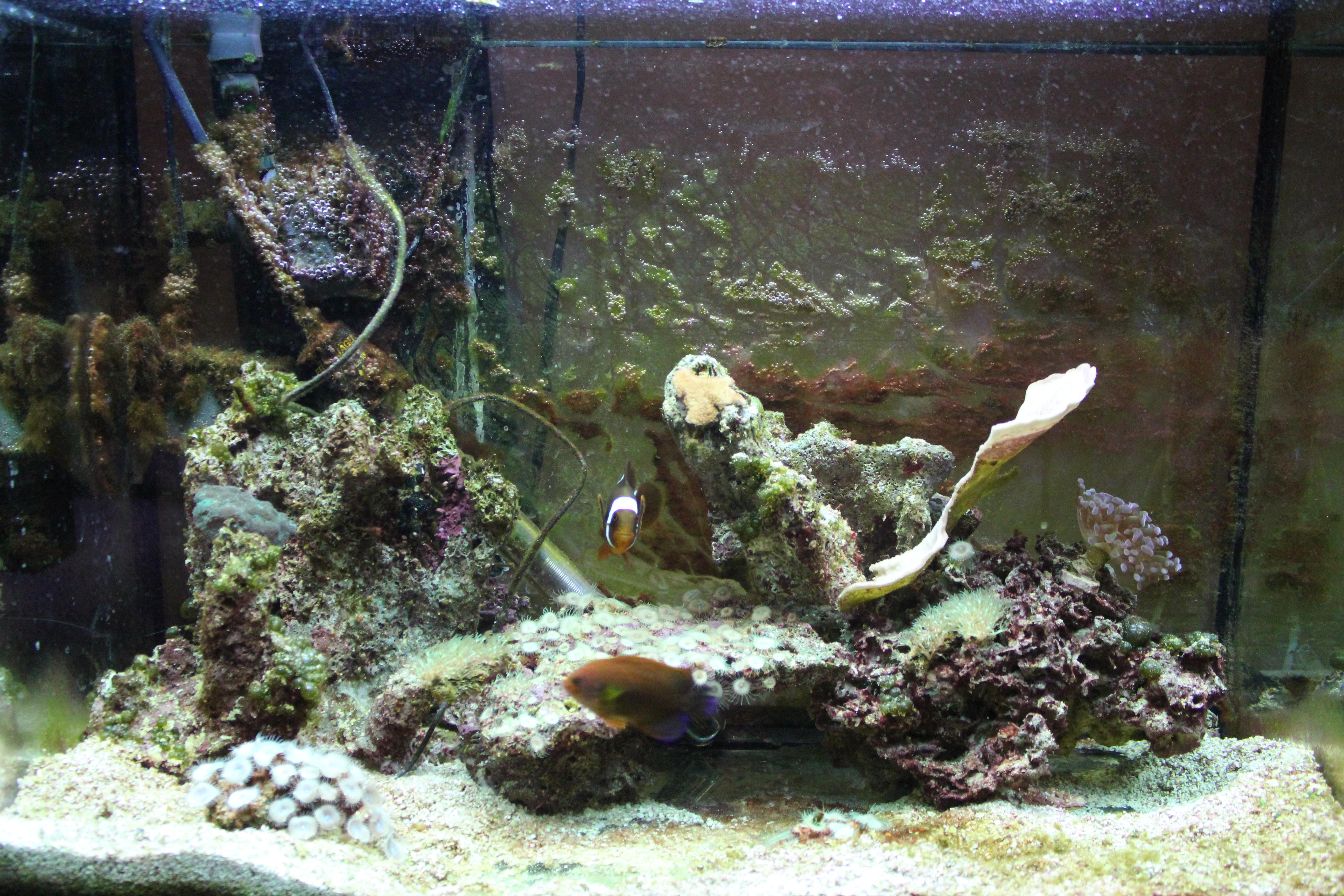 Aquarium fish tank cycle - 20 Gallon On Marine