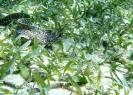 SCUBA, snorkeling, free diving, sea grass, spotted moray eel in Roatan