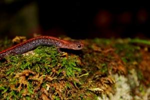 Wisconsin, Door County, amphibian, moss