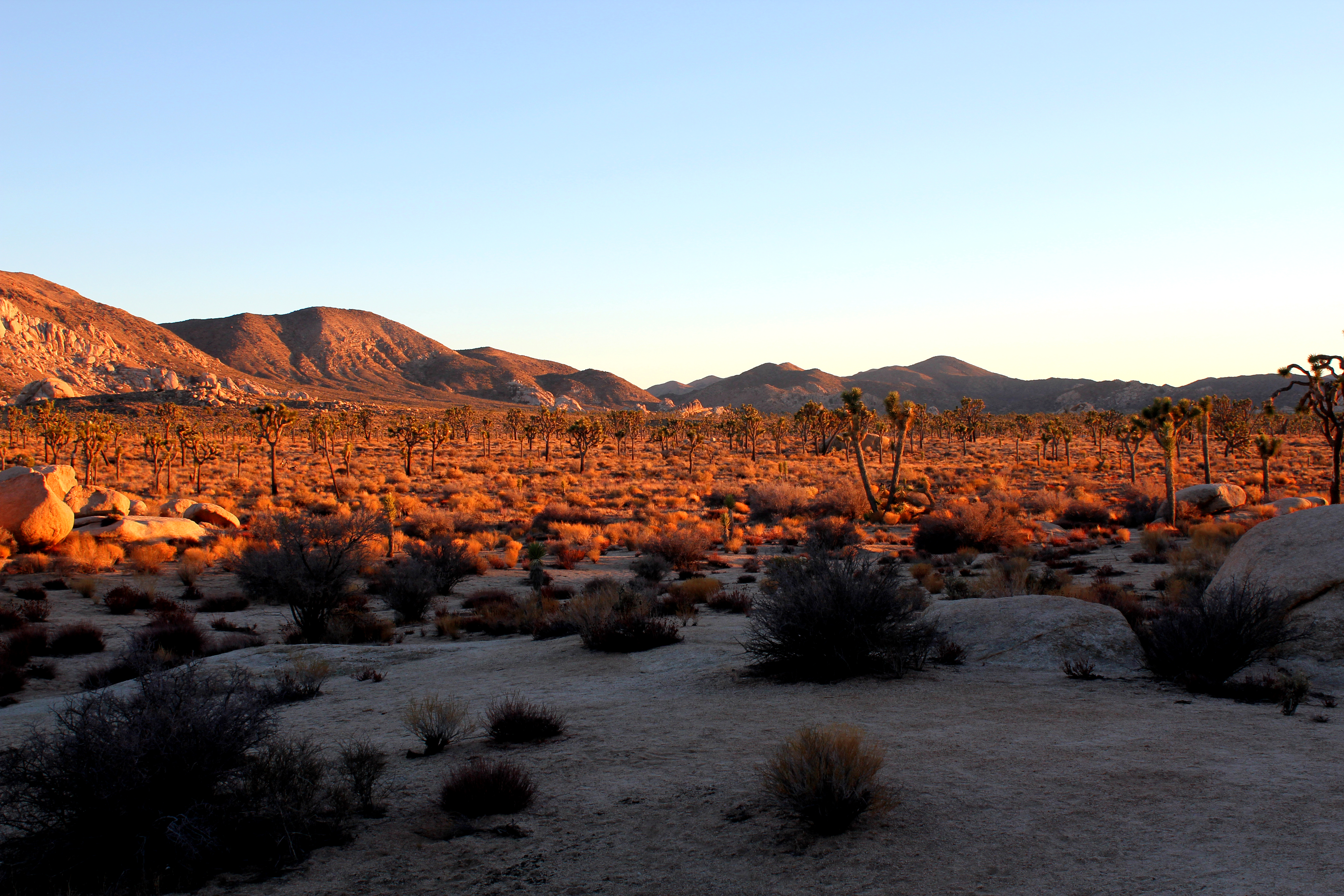 joshua tree sunset, sunset in the desert