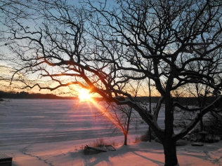 Wisconsin winter sunset, winter oak tree