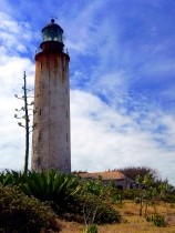 Carribean, yucca, lesser Antillies, tropical, Barbados ragged coast lighthouse