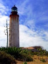 Carribean, yucca, lesser Antillies, tropical, Barbados ragged coast lighthouse