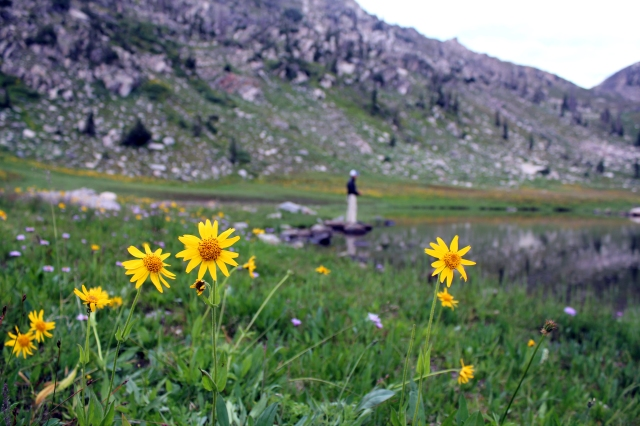 colorado wildflowers, colorado flyfishing, mica lake fishing, steamboat springs fishing