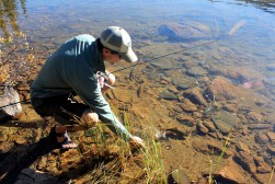 brookie, brook trout, crater lakes fishing, trout fishing, fly fishing
